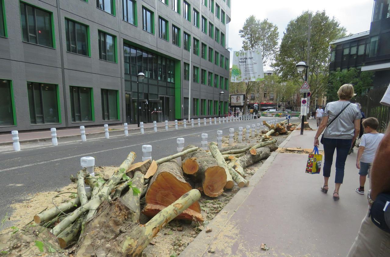 Allées Jean Jaures à Montrouge avec arbres abattus